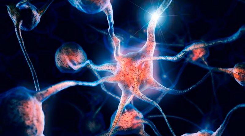 Científicos descubren una nueva clase de células de memoria en el cerebro