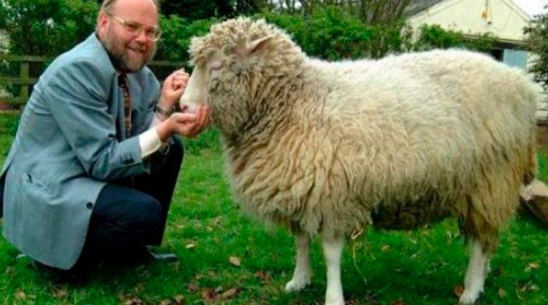 Se cumplen 25 años de la oveja Dolly, primer mamífero clonado