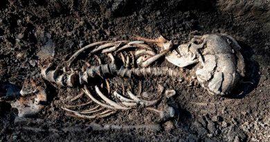 """Hallan bebés vikingos en """"entierro de aspecto sorprendentemente cristiano"""" en Suecia"""