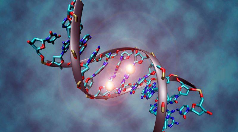 La castración de ovejas macho retrasa el envejecimiento del ADN