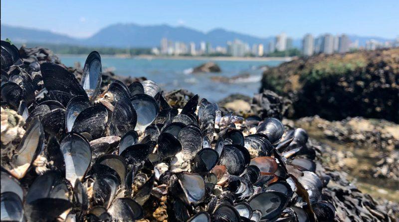 Ola de calor en EU y Canadá cocinó vivos a miles de animales marinos