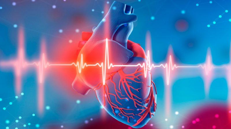 Las señales eléctricas entre las células cardíacas individuales regulan los latidos del corazón