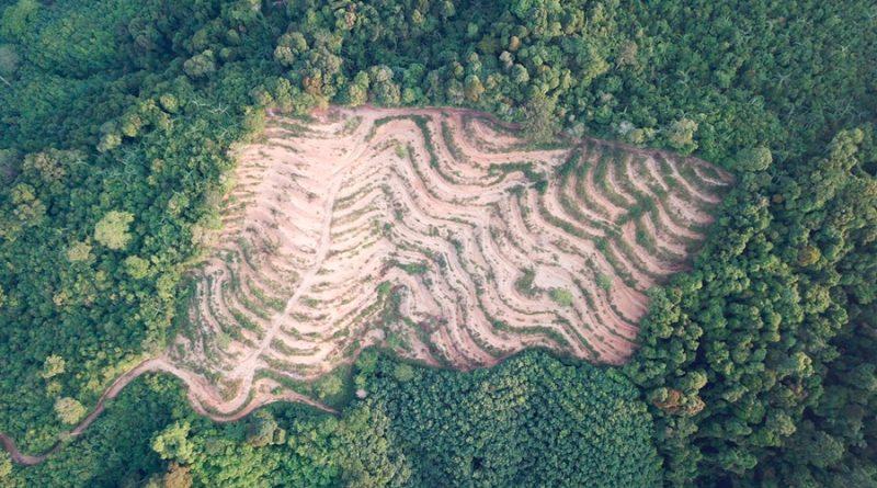 Sureste del Amazonas produce más dióxido de carbono del que absorbe, revela estudio