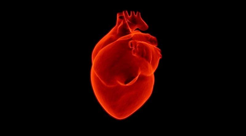 Desarrollan con células madre un corazón en miniatura que palpita