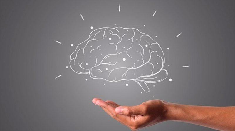Descubren nuevo tipo de célula cerebral que nos ayuda a orientarnos