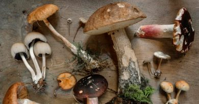 Investigadores de la UNAM dice que los hongos son la comida del futuro, ¿por qué?