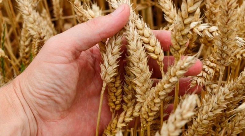 La manipulación de ARN es capaz de disparar las cosechas