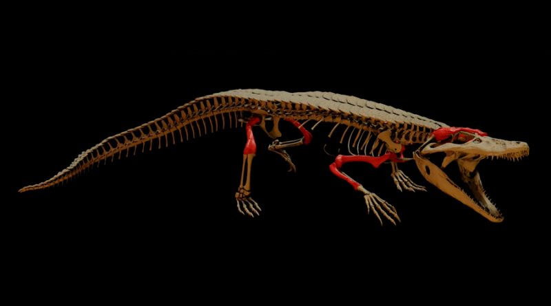 """Descubren un cocodrilo """"enano"""" de hace 148 millones de años"""