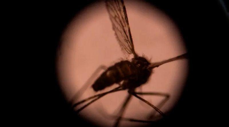 BioNTech apuesta por una vacuna contra la malaria usando ARN mensajero