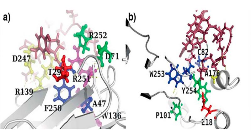 Diseño de péptidos para aplicaciones biomédicas