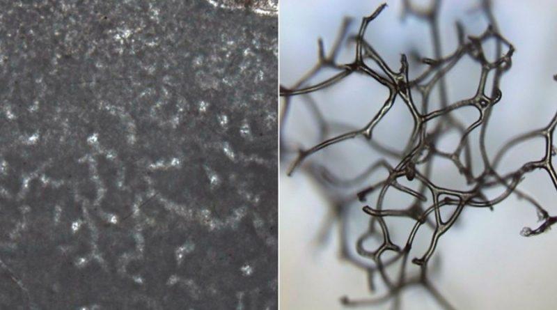 Las esponjas pudieron ser los primeros animales hace 890 millones de años