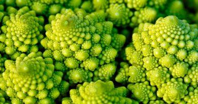 Fractales de la variedad romanesco de la coliflor son brotes que no llegan a ser flores