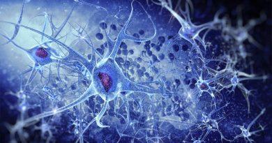Identificado el mecanismo que desencadena la respuesta de las neuronas del cerebro