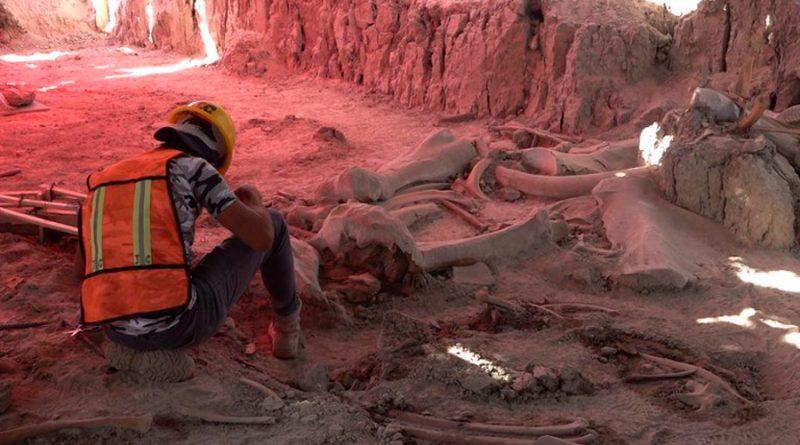 Camellos y perezosos gigantes, entre los tesoros de 200,000 años hallados en nuevo aeropuerto de Santa Lucía