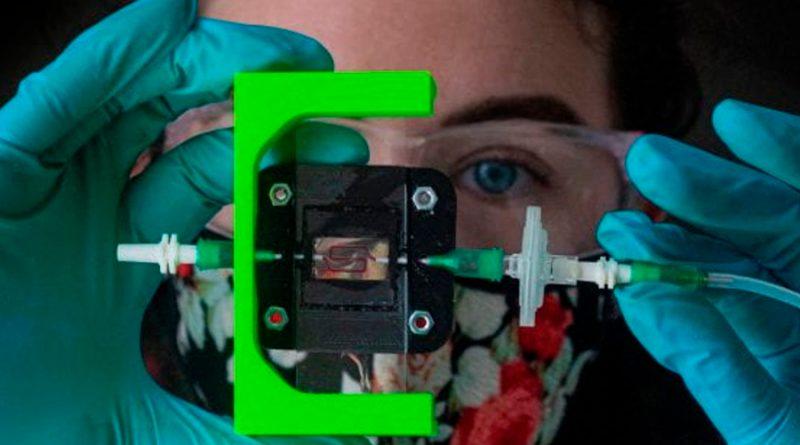 Investigadores crean un implante que produce insulina para la diabetes tipo 1
