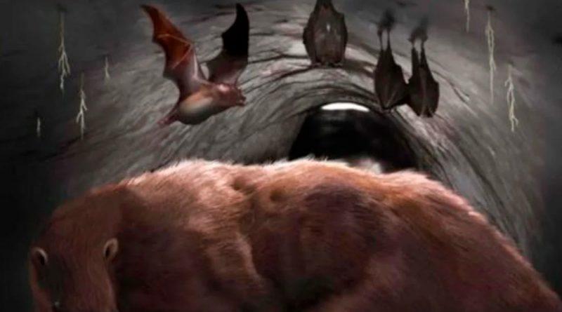 Hallan restos de un vampiro 'draculae' gigante de 100.000 años en una cueva en Argentina