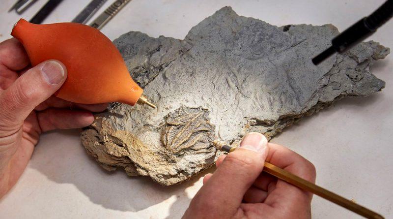Descubren cementerio de extraños animales marinos de hace 167 millones de años