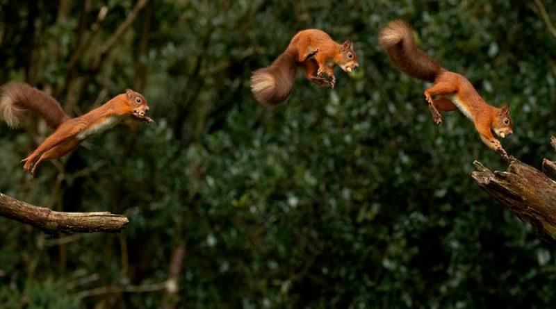 Los científicos querían entender cómo salta una ardilla. Y les sorprendió haciendo 'parkour'