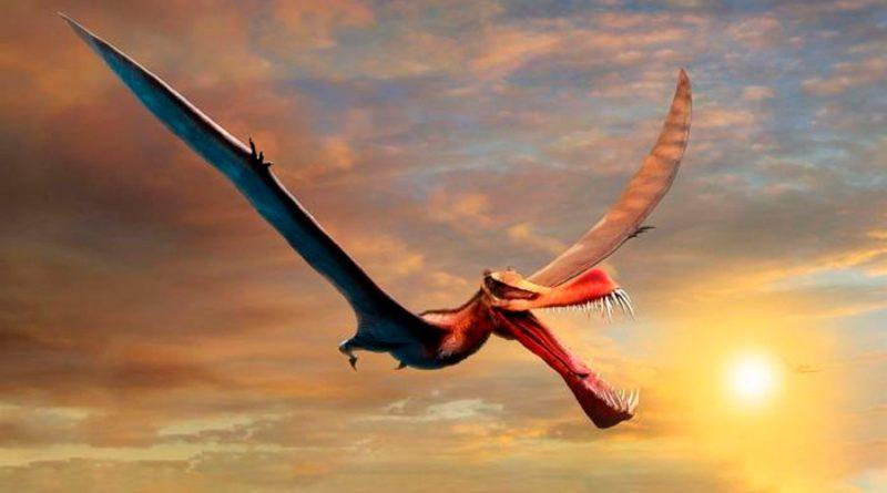 Encuentran en Australia a un dinosaurio volador, descrito como un dragón