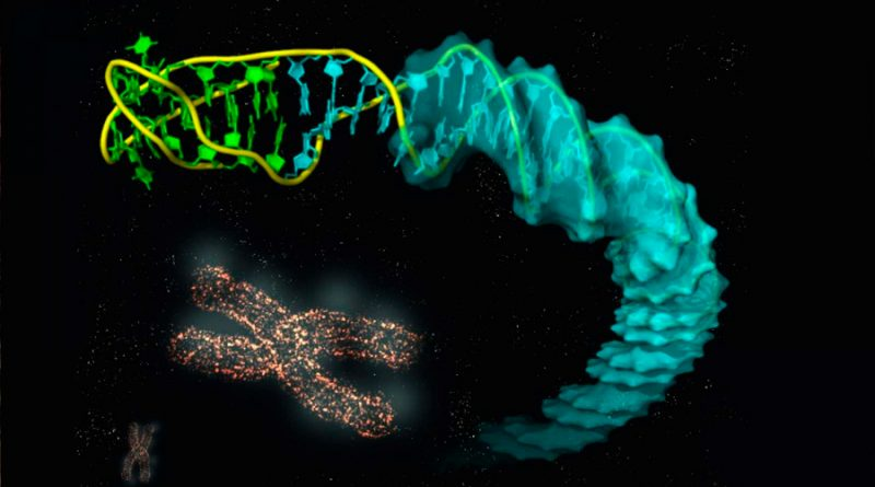 Describen la estructura de las uniones entre distintos tipos de ADN