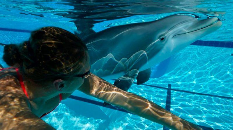 Animatrónicos: un delfín robot sustituirá a los animales en cautiverio