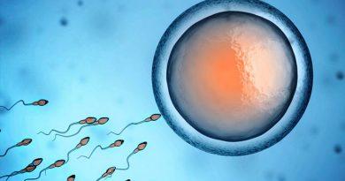 Un anticuerpo que atrapa espermatozoides: posible nuevo anticonceptivo no hormonal
