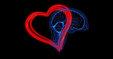 El corazón del cerebro desencadena procesos físicos en el organismo