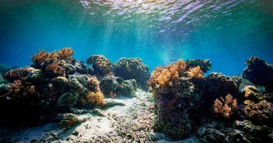 Descubren un coral gigante de 400 años en la Gran Barrera de Coral