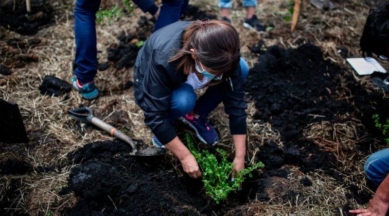 Cinvestav apuesta por el uso de hongos para beneficiar a la reforestación