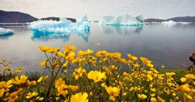 La cima de Groenlandia recibió lluvia, en lugar de nieve, por primera vez