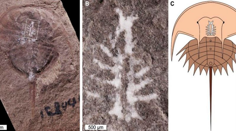 Hallan intacto un cerebro fosilizado de 310 millones de años de antigüedad