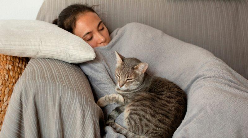 Lo dice la ciencia: Gatos verían a sus humanos como sus padres