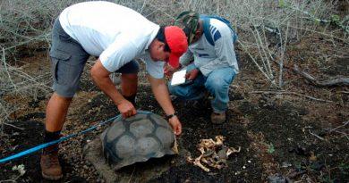 Galápagos forma y emplea a sus ciudadanos como científicos para atajar la crisis del turismo