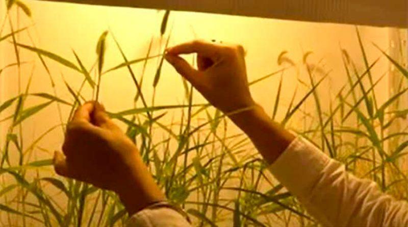 Nueva tecnología prolonga la vida de las plantas