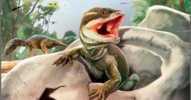 Taytalura, la nueva especie que ahonda en el origen de los reptiles modernos