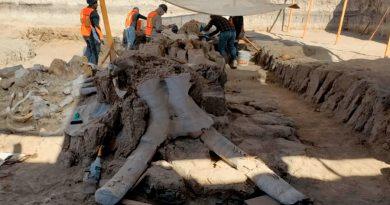 La construcción del nuevo aeropuerto ha permitido conocer la riqueza de mamuts en México: Joaquín Arroyo-Cabrales