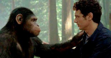 Los simios también se saludan y se despiden como hacen los humanos