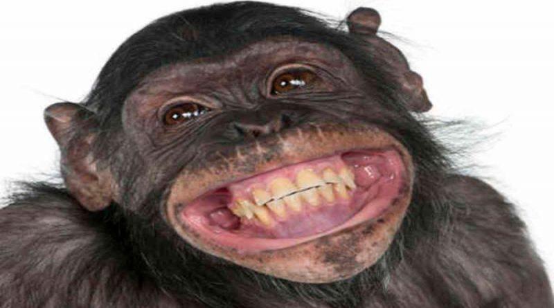 'Los bebés ríen como monos': primatólogo que estudia la risa
