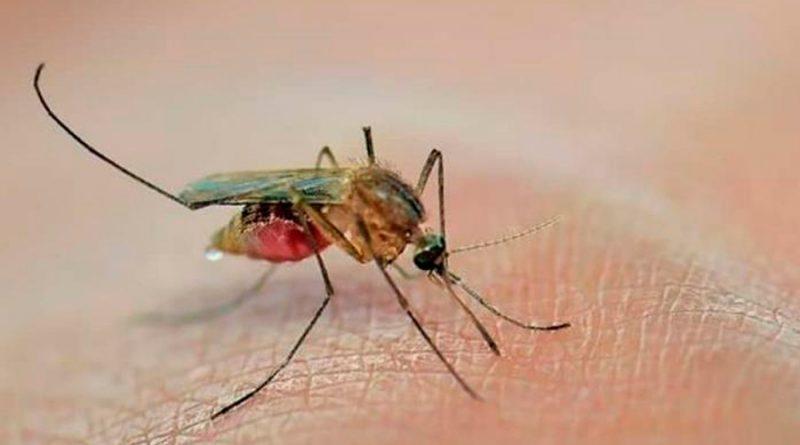 ¿Te pican mucho los mosquitos? Estas son las razones, según la ciencia