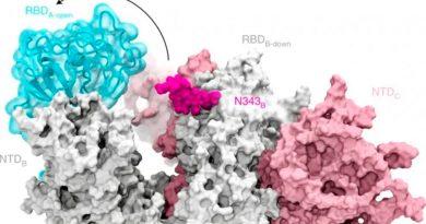Covid-19: descubren la molécula que permite al virus entrar a las células