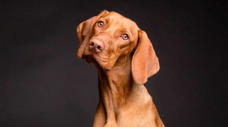Tu perro detecta tus mentiras
