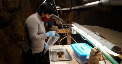 Descubren cuatro ramos de flores en Teotihuacán de hace mil años