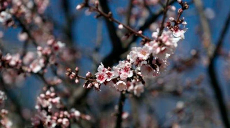 El sorprendente fenómeno que impide que las plantas florezcan con el frío