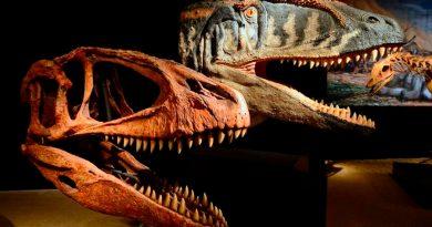 Nuevo dinosaurio carnívoro gigante era temido por los tiranosaurios más pequeños
