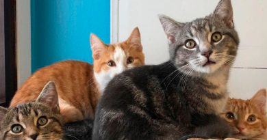 Estudio genético revela cómo se forman los patrones de color en los gatos