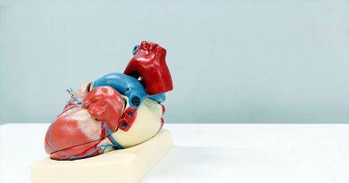 Médicos descubren cómo el cerebro modula la actividad del corazón