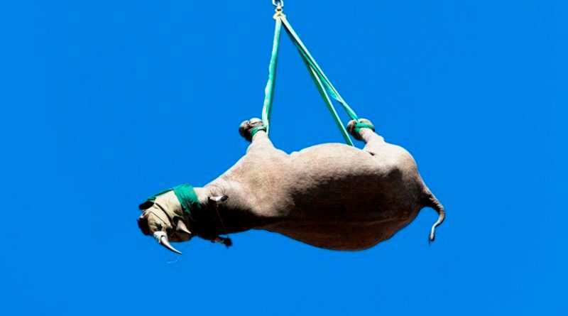 Premios Ig Nobel para rinocerontes colgantes y chicle pegado al piso