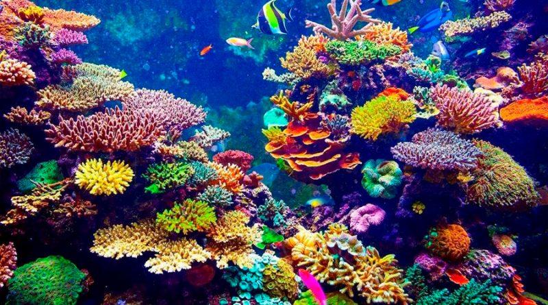 Completan el primer mapa detallado en Internet de los arrecifes de coral del mundo