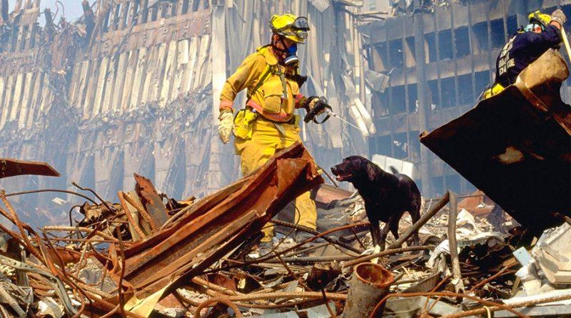 Los perros de rescate: verdaderos héroes del 11 de septiembre