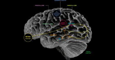 Esto es lo que pasa en el cerebro al ver a la persona que amamos